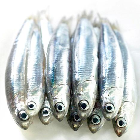 Cá Cơm ( ĐL)